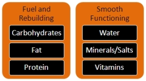 The 6 Nutrient Groups